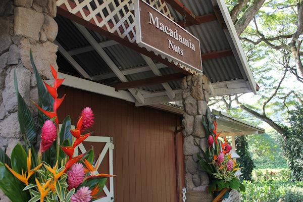Macadamia Nut Tropical Farm